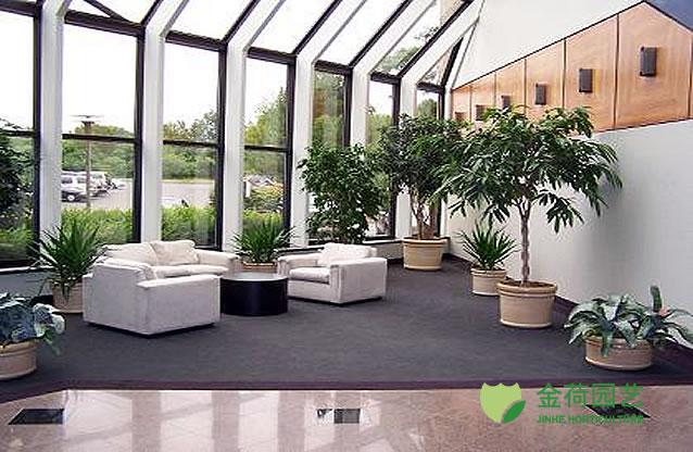 办公室盆栽植物_写字楼办公室休闲区域绿化效果图(10)_绿植租赁养护_上海金荷园艺