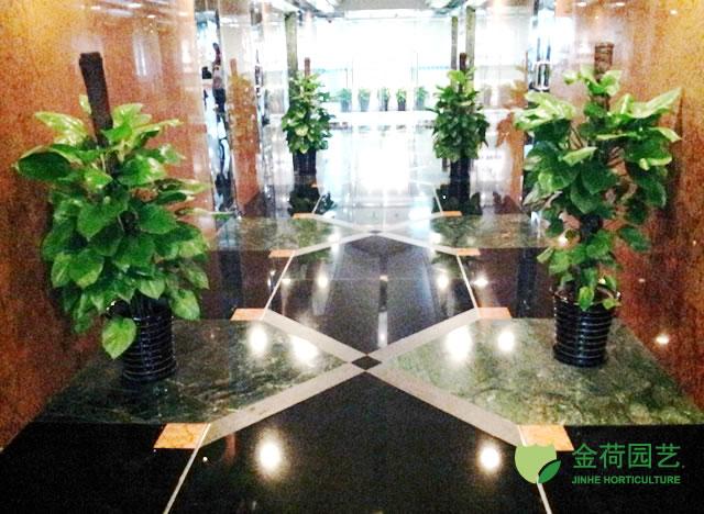 绿化效果图 22 写字楼办公室大堂绿化效果图 22