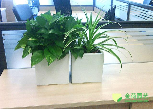 写字楼办公室台面绿化效果图(36)