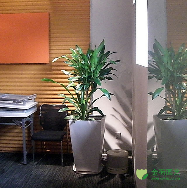 效果图 写字楼/写字楼办公室办公间绿化效果图(83)