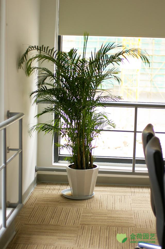 写字楼办公室公共区域绿化效果图(111)