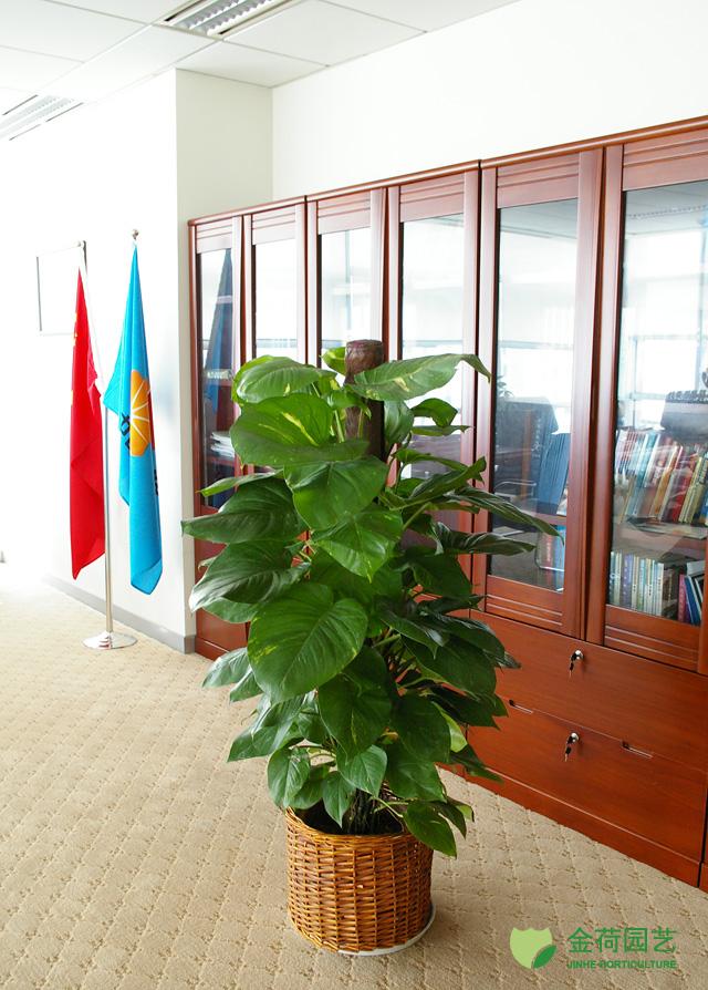 效果图 写字楼/写字楼办公室办公间绿化效果图(110)