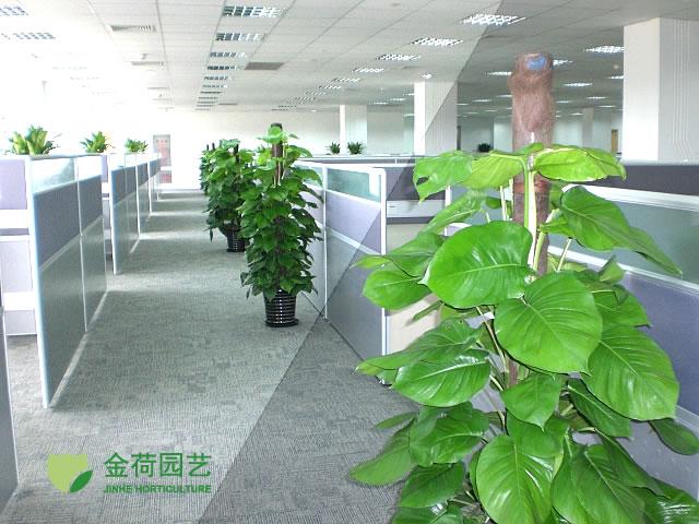 植物 中国 写字楼/写字楼办公室过道绿化效果图(18)...