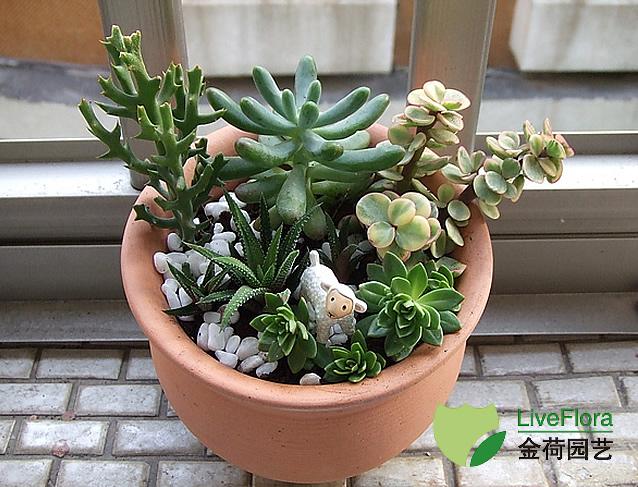上海多肉类植物组合盆栽植物租赁养护出租布置