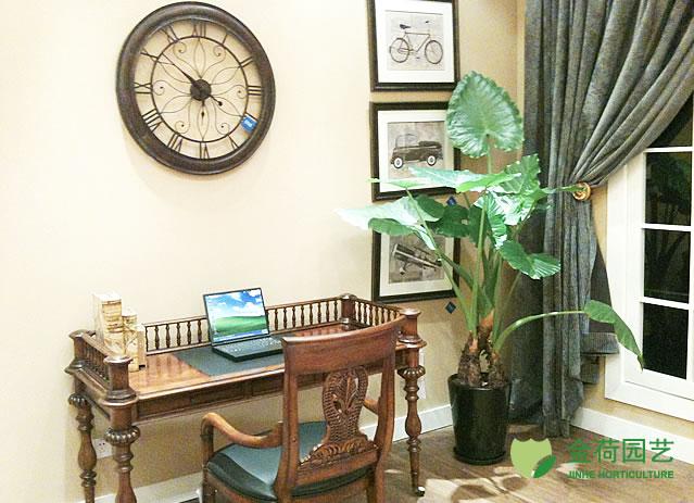 效果图 写字楼/写字楼办公室前台绿化效果图(50)