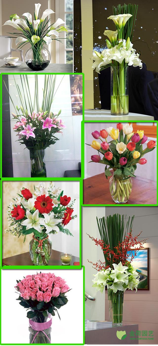 高雅瓶花 鲜切花(1)