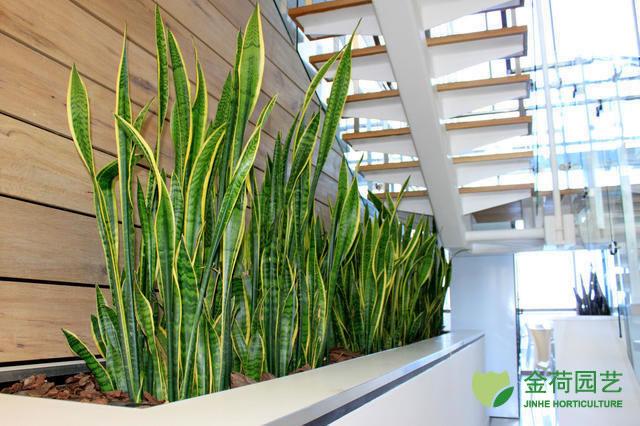 写字楼办公室园艺角植物租赁养护效果图(64)