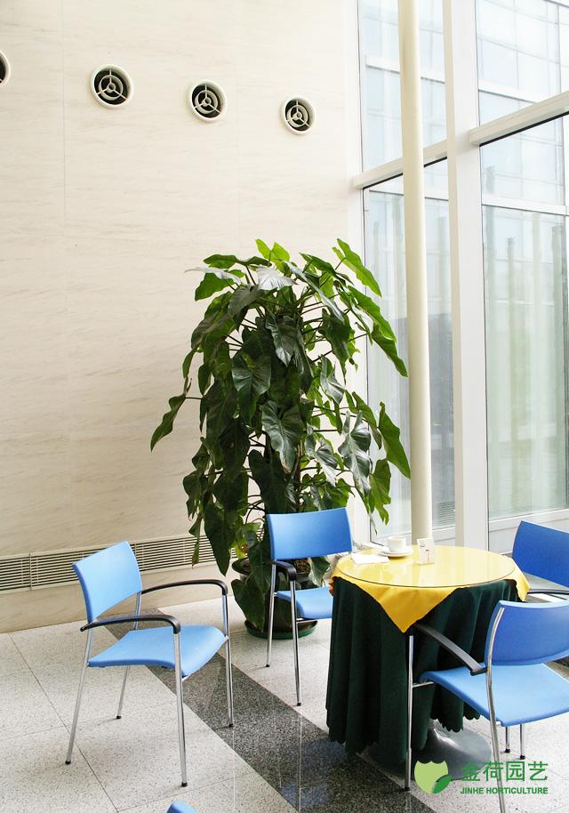 效果图 写字楼/写字楼办公室休闲区域绿化效果图(109)